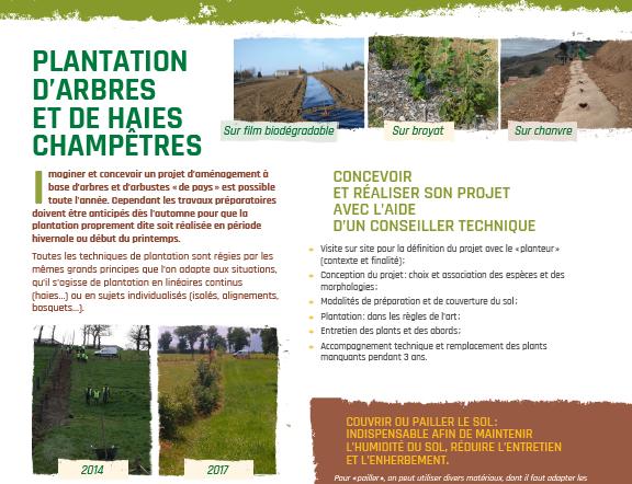 AFAOC FT plantation