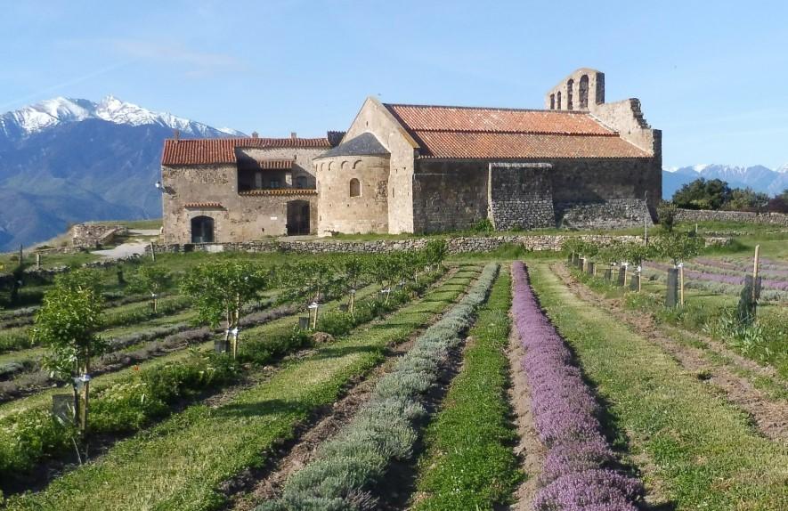 AFAOC_Agroforesterie-méditerranée
